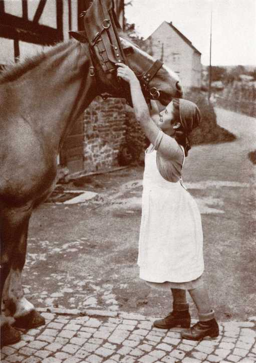 Arbeitsmaid-Pferd